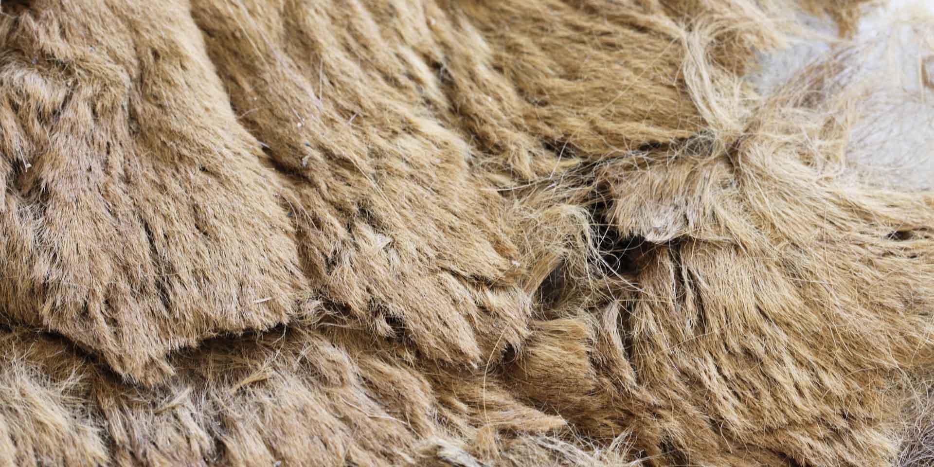 Close-up of preserved brown bear pelt