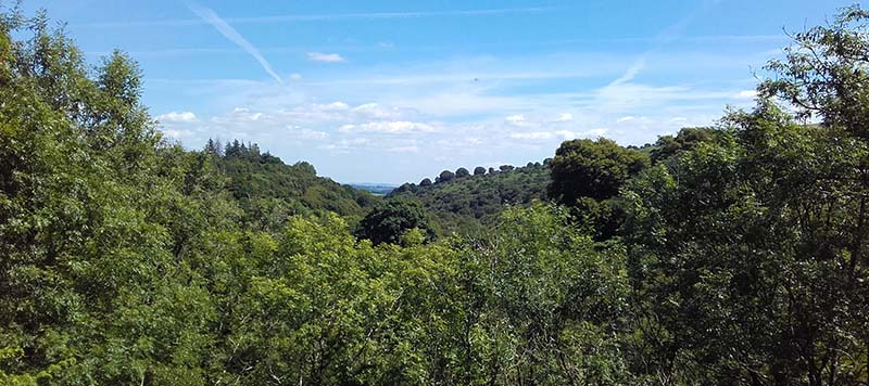 View over woodland in summer time