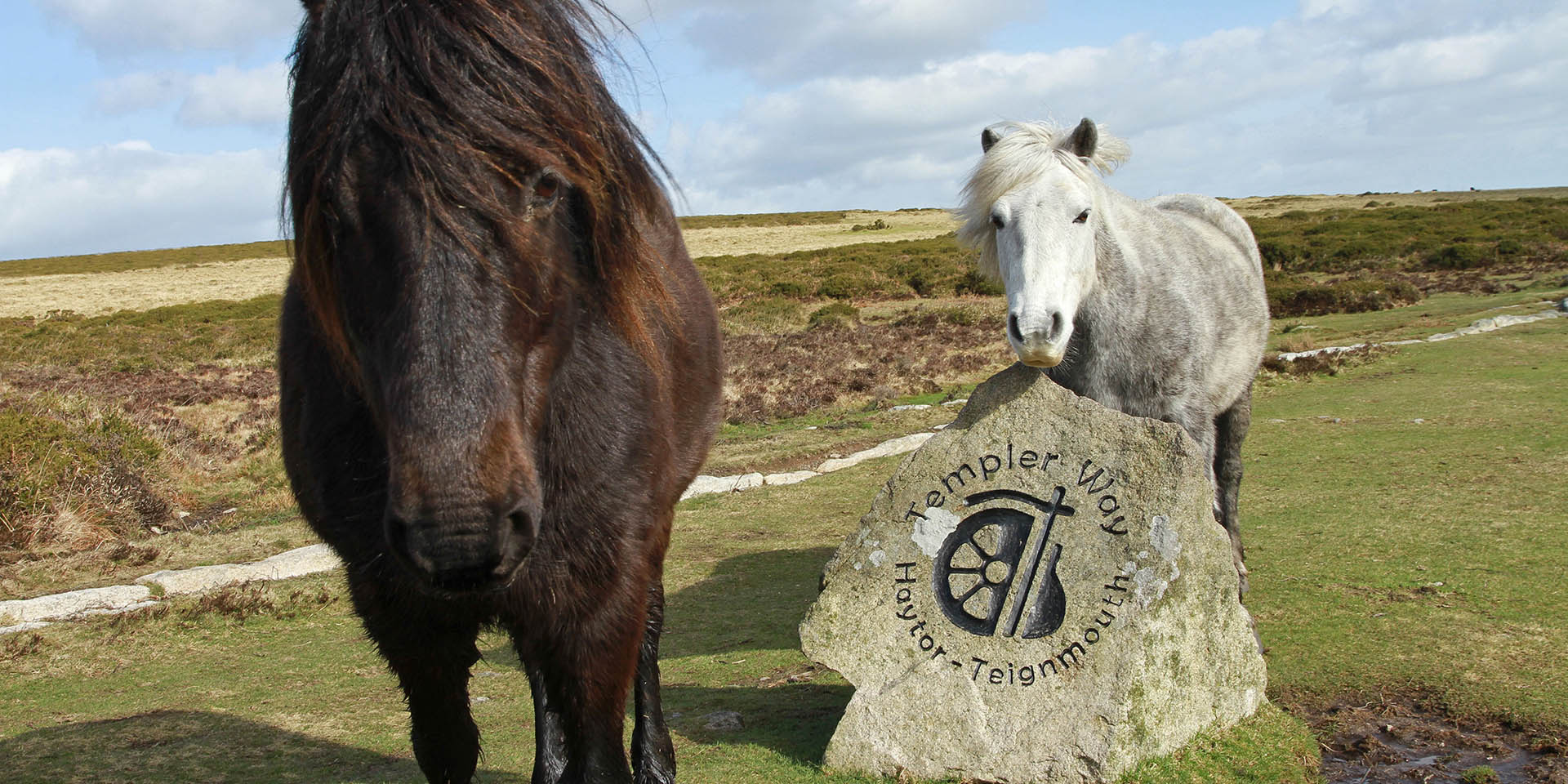 Ponies next to the Templer Way sign