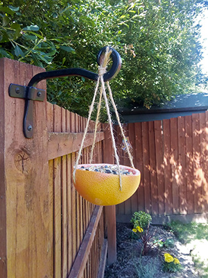 Grapefruit rind full of bird seed hanging from garden fence