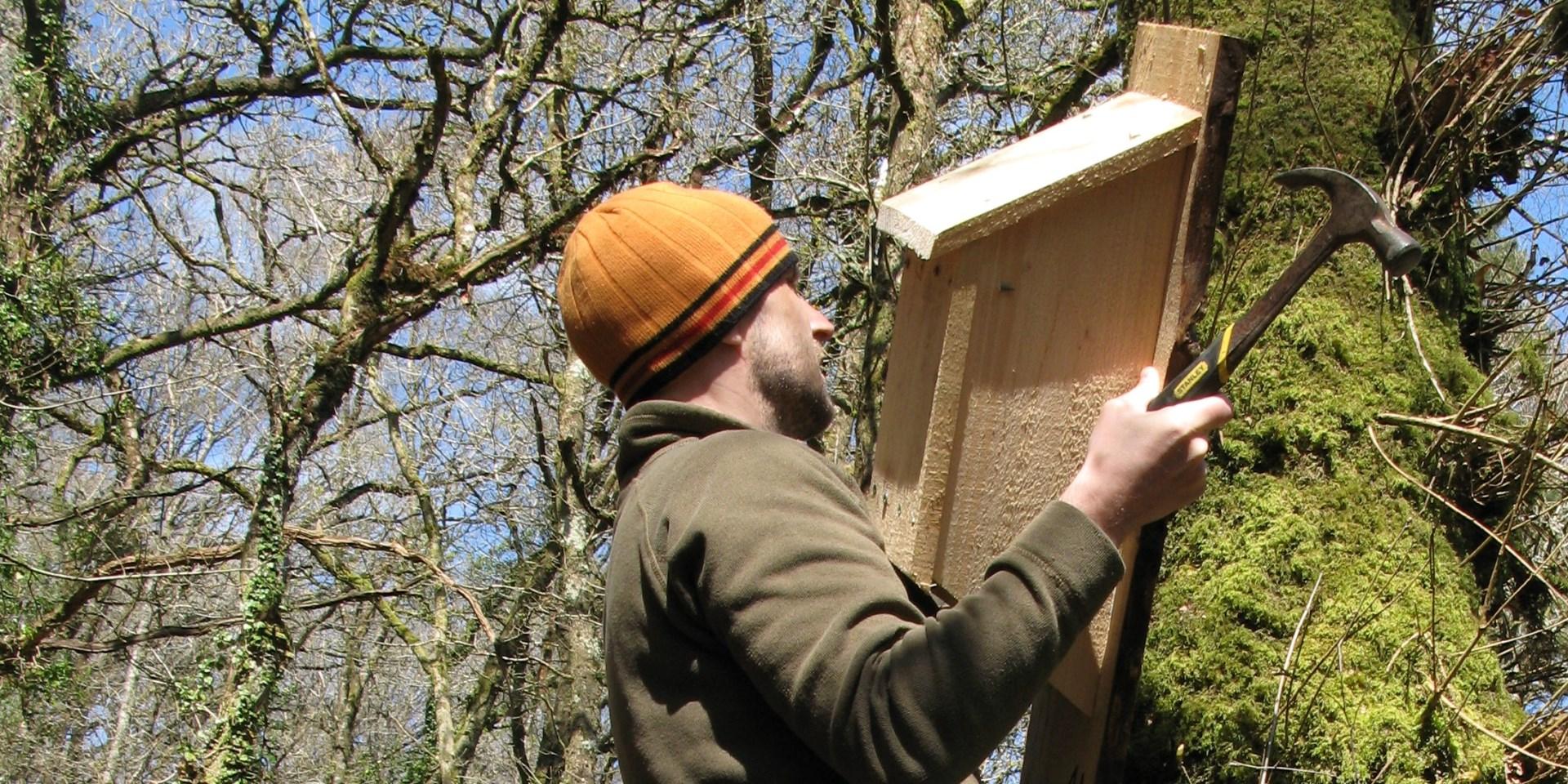 Siting a nest box