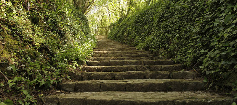 Stone steps leading up a leafy green corridor