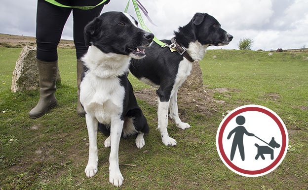 Two collie dogs on leads with dog on lead symbol