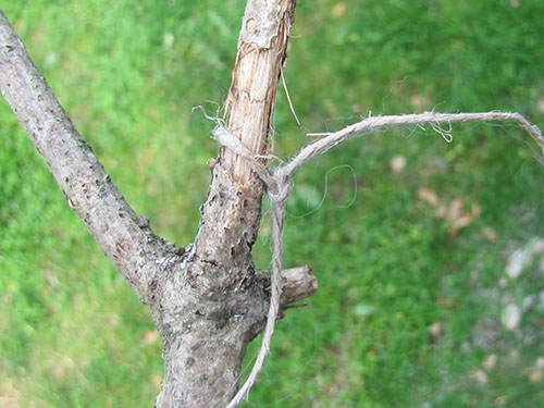 Piece of string tied to a stick