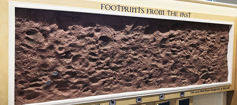Large plaster board with moulds of prehistoric animal and human footprints