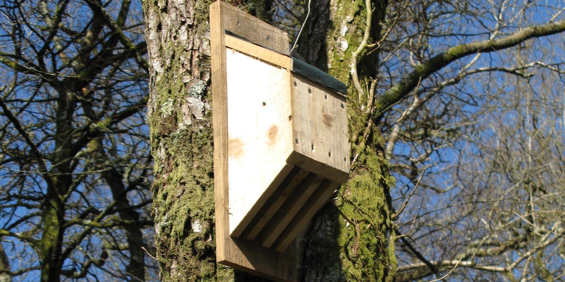 Bat box in tree