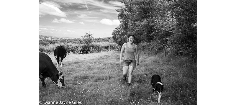 Farmer Jenny and dog walking through field of cows