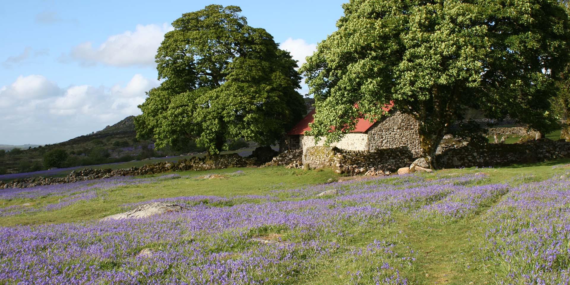 Emsworthy barn and bluebells