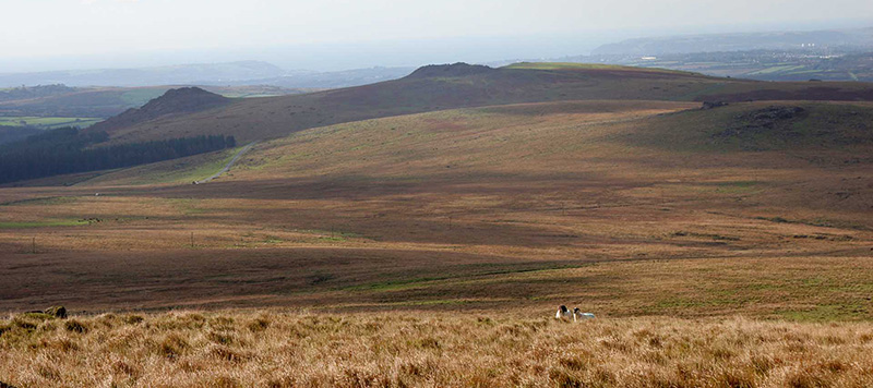 Wide sweeping moorland and two sheep in foreground