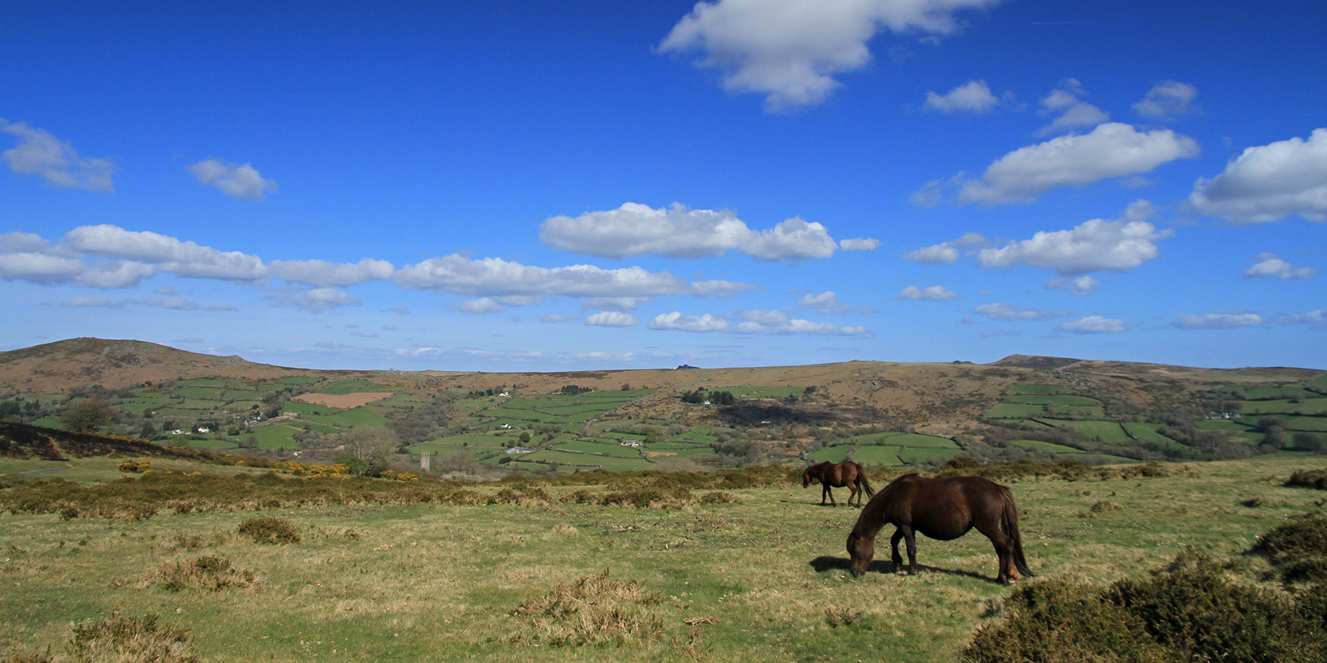 Ponies on hill overlooking Widecombe