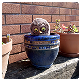 Owl puppet peaking out of a flower pot