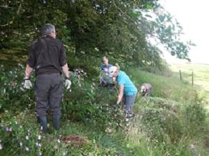 Volunteers clear Himalayan balsam plants
