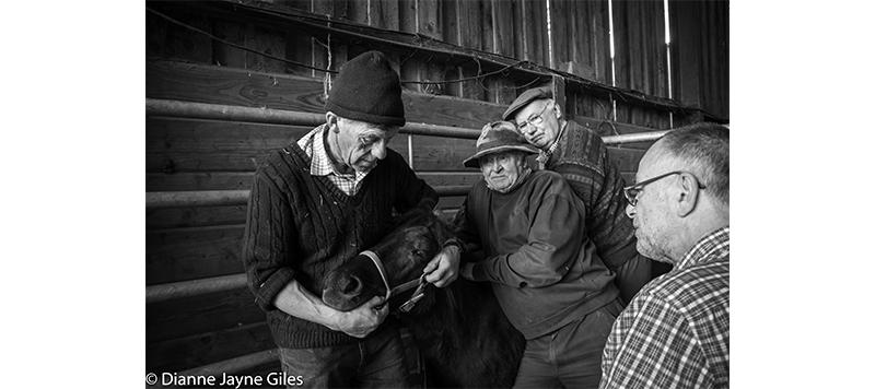 Four farmers holding a pony