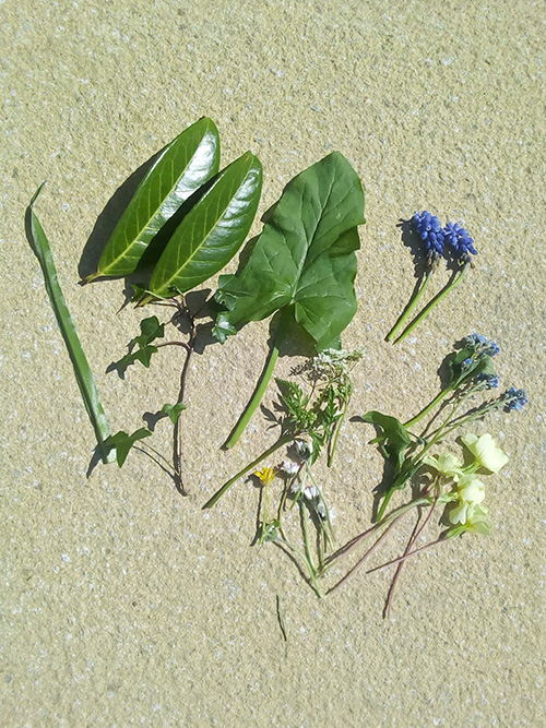 Assortment of leaves and small flowers laid out on the ground