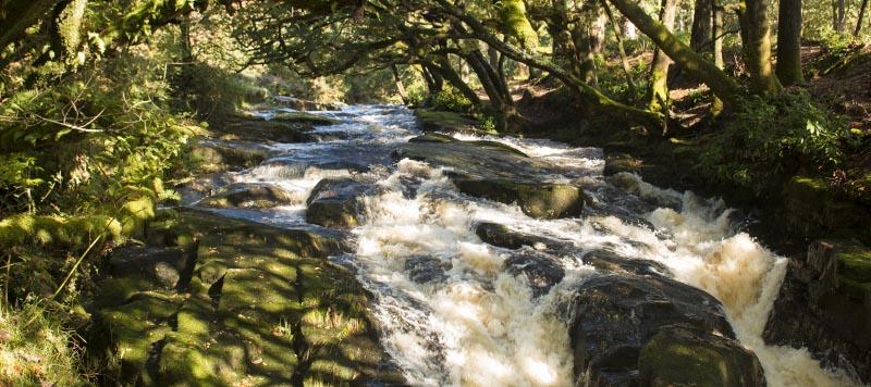 River Avon waterfall under a canopy of green oak trees