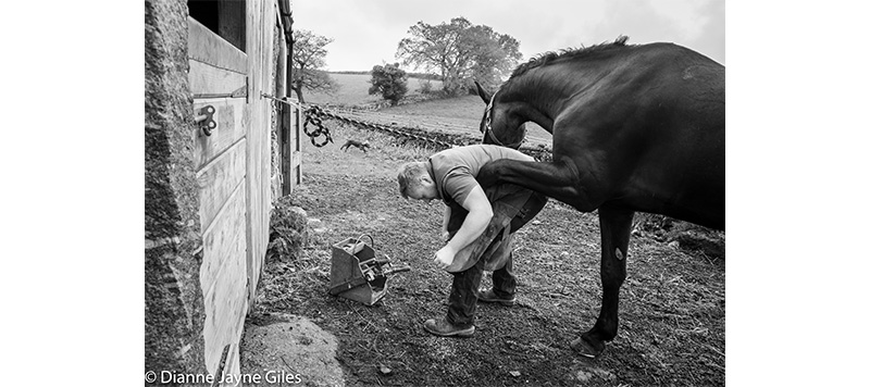 Farrier working on horse's hoof