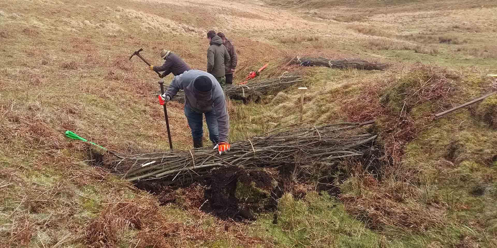 Commoners building multiple willow faggot dams on moorland