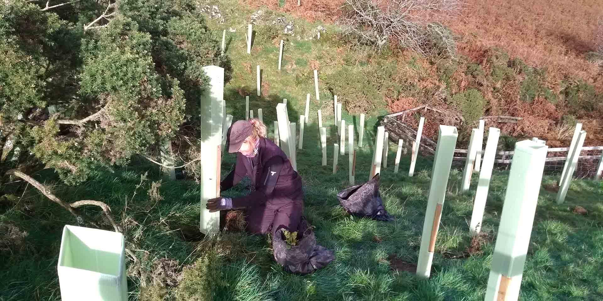 Ranger planting trees